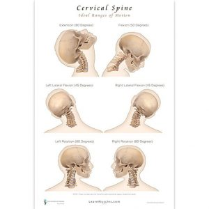 Cervical Spine Poster