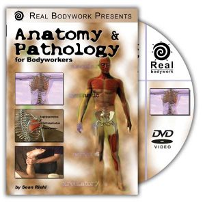 Anatomy & Pathology for Bodyworkers