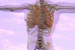 Anatomy & Pathology for Bodyworkers