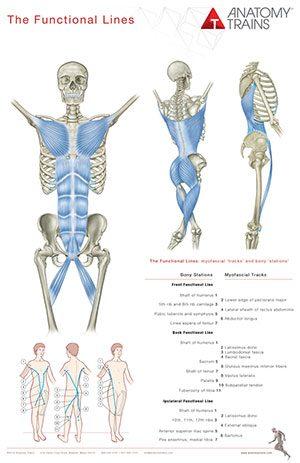Anatomy Trains Poster