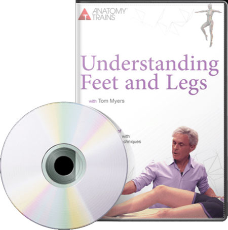 Understanding Feet and Legs