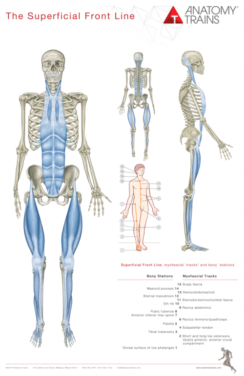 Anatomy Trains Poster