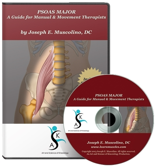 PSOAS MAJOR: A Guide for Manual and Movement Therapists